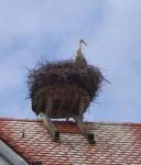 Stork am Rathaus, Illmensee, Germany